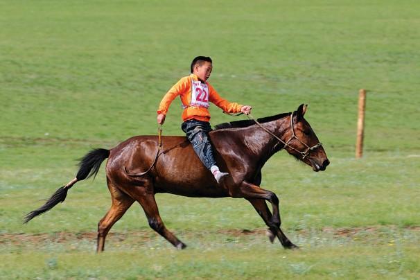 Naadam-Pferderennen