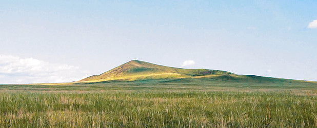Birds of Eastern Mongolia (15 days)