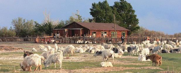Schutz der Gobi Bären, Mazaalai (18 Tage)